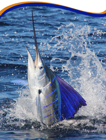 East cape resorts mexico sportfishing vacations baja for Deep sea fishing mexico