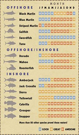 salt-water-fishing-chart