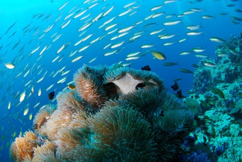 diving-689825_960_720